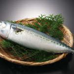 魚種ごとの釣りポイント一覧表♪
