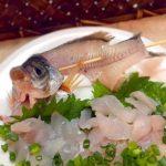 神奈川釣りポイント 【宮川港】ウミタナゴ爆釣ポイント!今晩のおつまみにウミタナゴの刺身が食べれます!