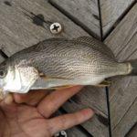 東京都 釣りポイント【若洲海浜公園】都内唯一の釣り施設で釣れる魚と狙い目のターゲット紹介♪