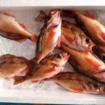 神奈川 釣りポイント【城ケ崎】30cm級金メバルが釣れる穴場スポット